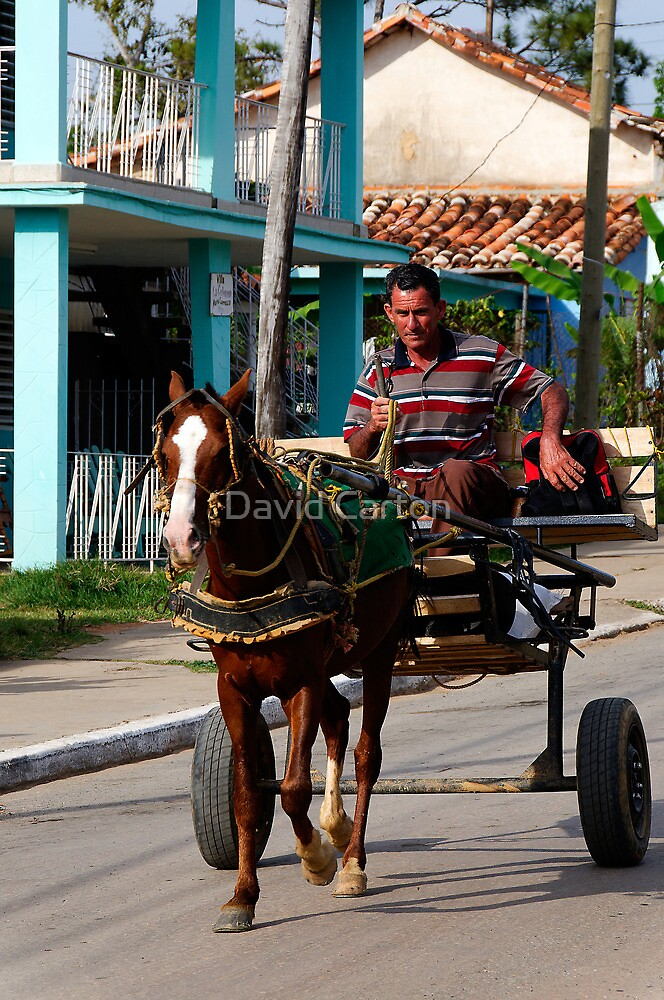 Horse and cart, Vinales, Cuba by David Carton