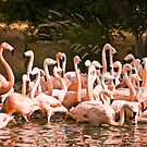 Flamingos by Viktoryia Vinnikava