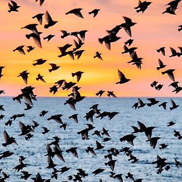 Un cielo lleno de pájaros parte 3 de chuckirina