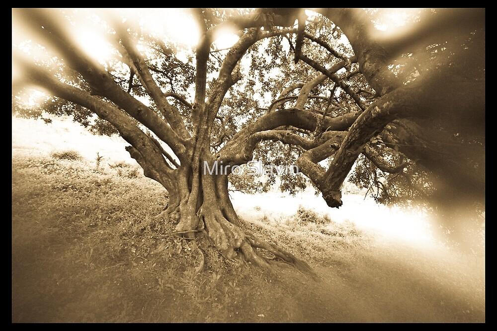 Magic tree - history on branches by Miro Slavin