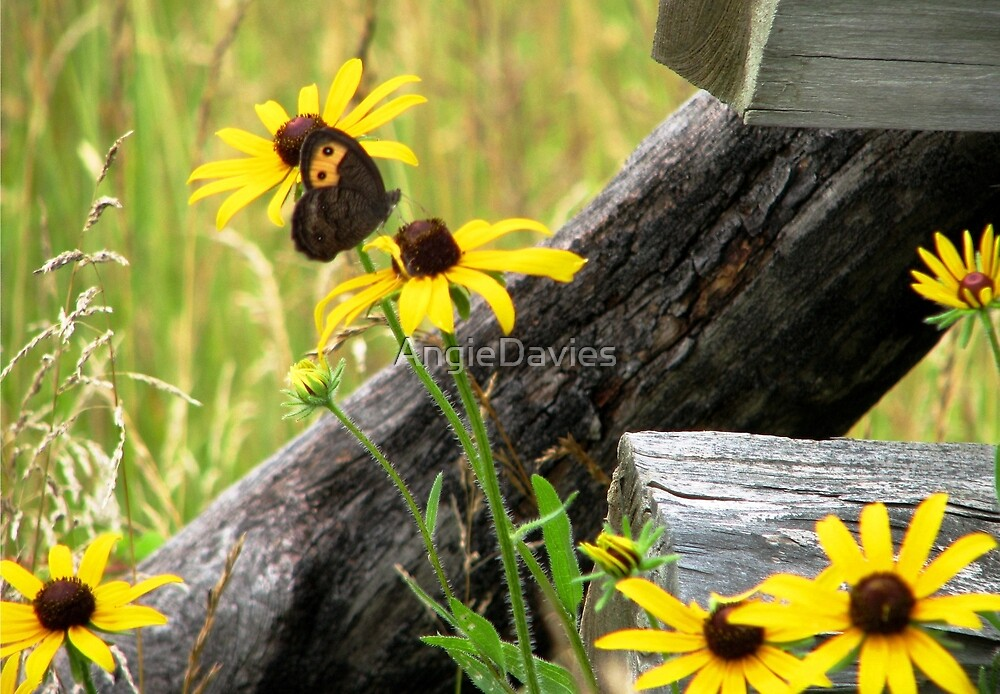 Country Meadow by AngieDavies