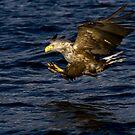 Eagle by Per E. Gunnarsen