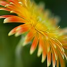 Spring Colors by Mukesh Srivastava
