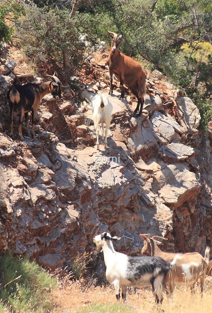 Greek goats by zumi