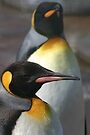 King Penguins by Sandra O'Connor