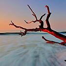 Rushing Waves by Jaime Hernandez