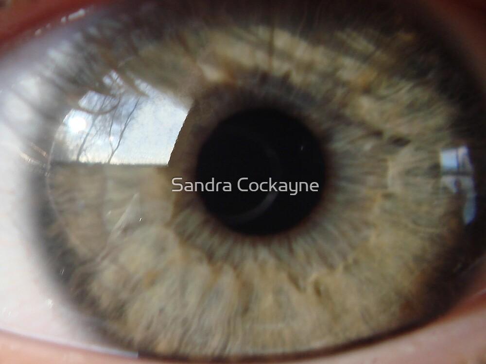 Reflections by Sandra Cockayne