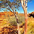 Gum Trees - Kings Canyon  by Lexa Harpell