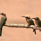 THIS IS MY FAMILY -  WHITE FRONTED BEA-EATER– Merops bullockaides by Magriet Meintjes