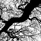 Trees of Polgooth by SpencerCopping