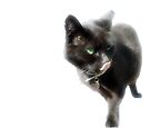 What looks like my Two legged Cat by Kerensa Davies