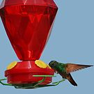 Hummingbird lunch time by MaluC