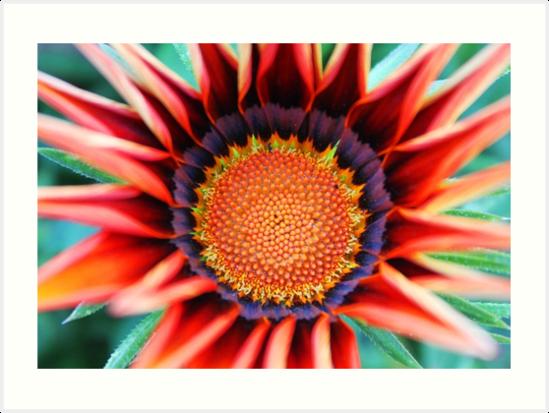 Pretty Flower by redda