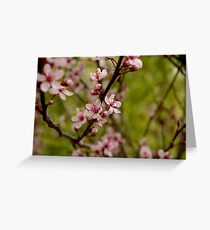 shrub flower Greeting Card