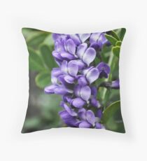 Mescal Bean Tree Throw Pillow