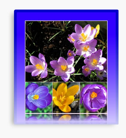 Spring Crocus Collage in Reflection Frame Leinwanddruck