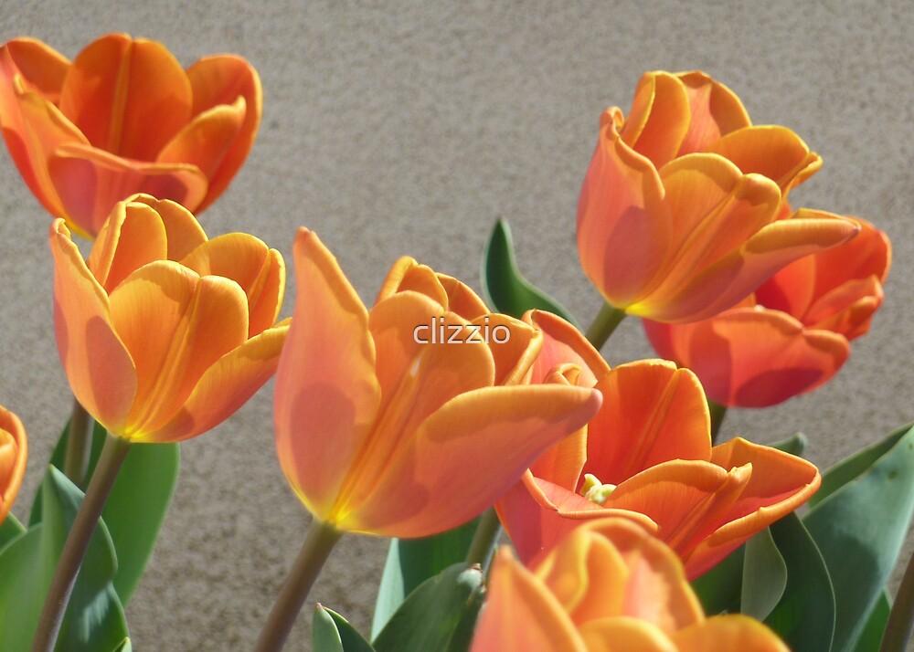 Tulips in Orange  by clizzio