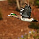 Spring on the Wing by Kenneth Haley