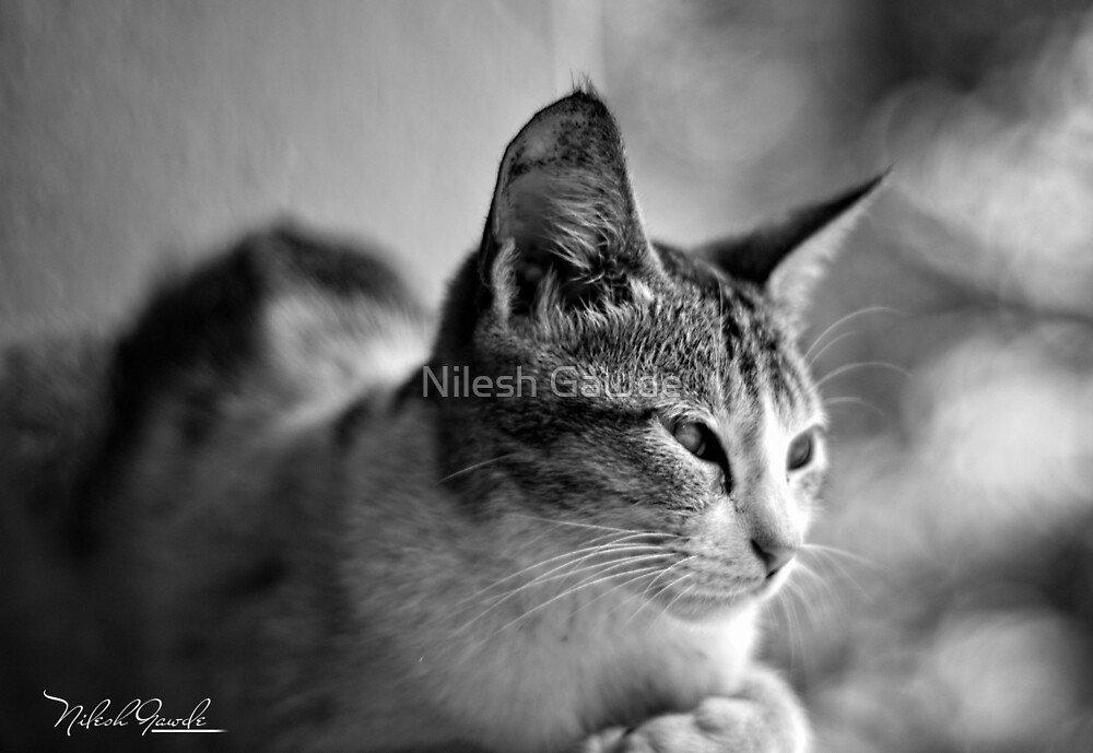 cat by Nilesh Gawde