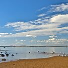 An afternoon on the beach with the gulls. by johnrf