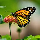 Butterflies Are Free by Lanis Rossi