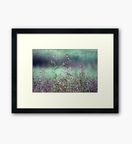 Field of Pink and Green Framed Print