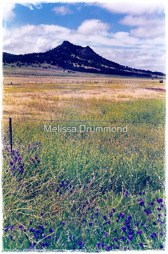 Flinders Ranges by Melissa Drummond