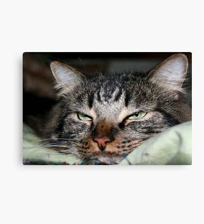 Can't You See I am Trying to Sleep?  Canvas Print