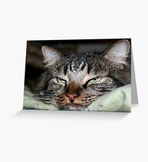 Can't You See I am Trying to Sleep?  Greeting Card