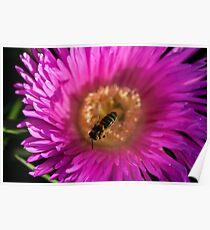 flying bee abeja volando Poster