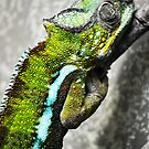 Chameleon by INTERACTION