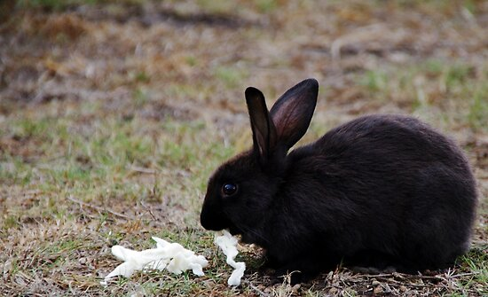 Bunny Too by Brian Edworthy