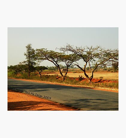 India Highway (with Tamarind Trees) Photographic Print