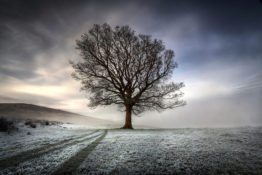Frosty Sycamore Tree - Loch Tay  by Angus Clyne