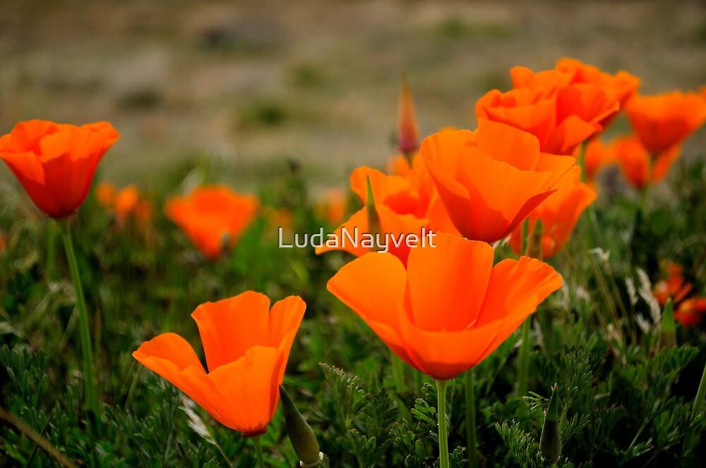 Antelope Valley  by LudaNayvelt