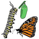 Metamorphosis of a Monarch Butterfly  by rmcbuckeye