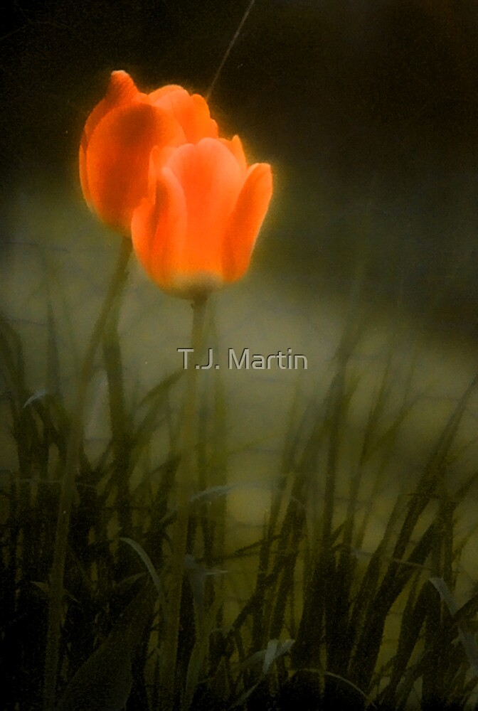 The Color of Spring - Bridgton,  Maine by T.J. Martin