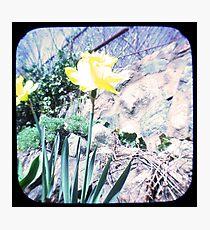 Daffy TTV Photographic Print