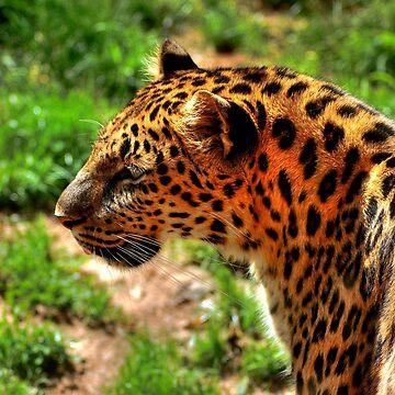 Leopard by blutat2