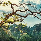 Tree in the mountains by Pascal Deckarm