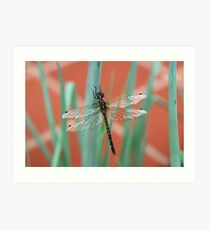 Dragonfly content on Shallots Art Print