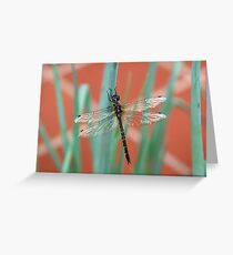 Dragonfly content on Shallots Greeting Card