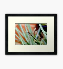 Dragonfly on Shallots 2 Framed Print