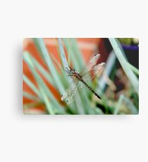 Dragonfly on Shallots 2 Metal Print