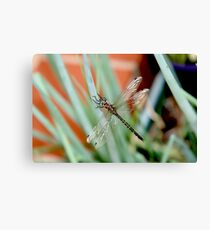 Dragonfly on Shallots 2 Canvas Print