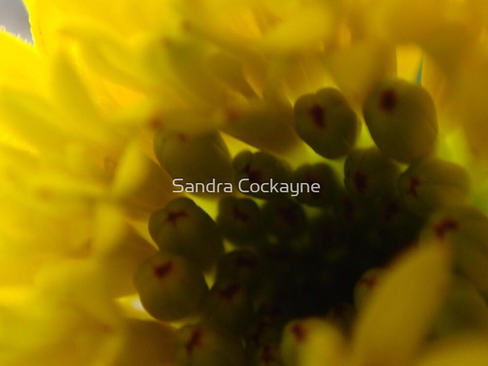 Yellow Wallart by Sandra Cockayne