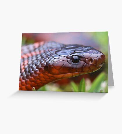 Collett's Snake 1 Greeting Card