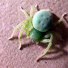 ArachnoGreen! by LouJay