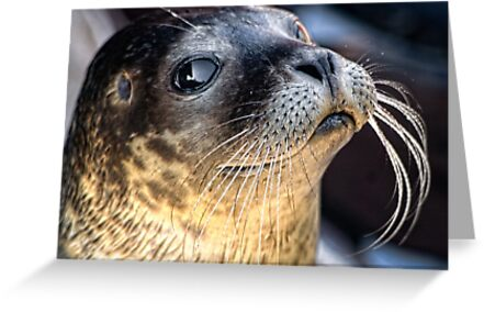 Check Out My Whiskers! by hebrideslight