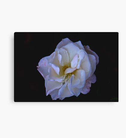 Hint of Pink (Rose) Canvas Print